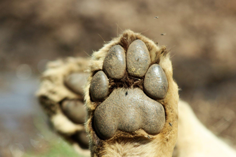 5 days Lodging Safari
