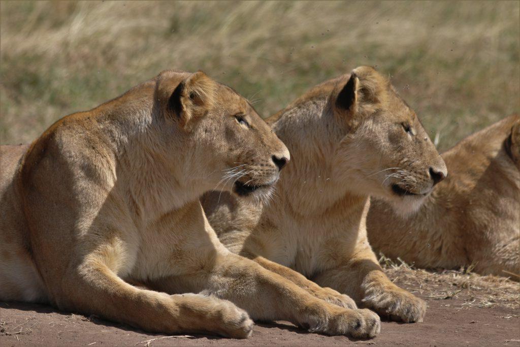 4 Tanzania Lodging Safari