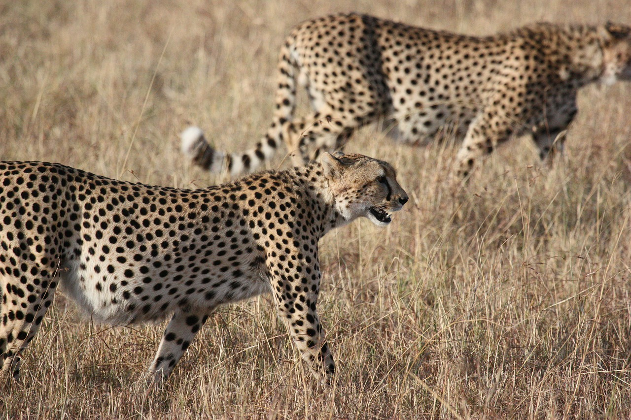 6 Days Tanzania Lodging Safari