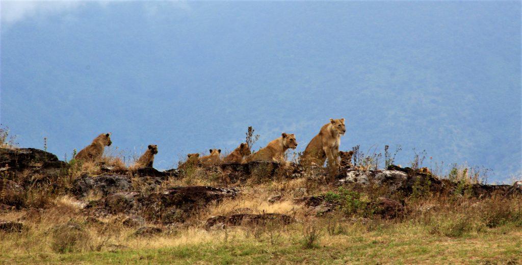 Safari to Serengeti