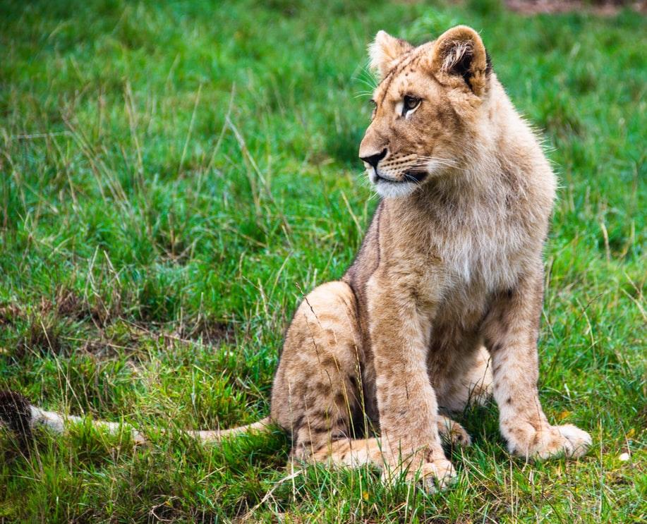 Book a safari in Tanzania