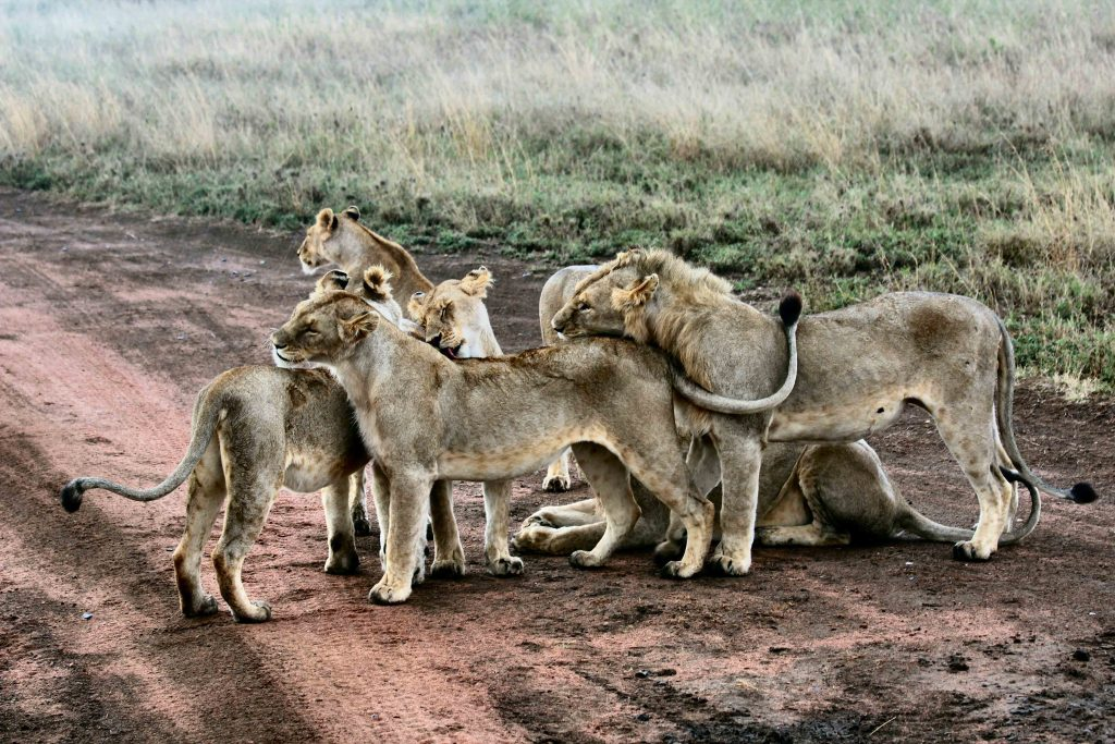 2 Days Tanzania Luxury Safari